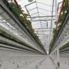 智能温室大棚铝型材-反渗透纯水设备-空中草莓栽培系统-种植塔