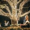 树木亮化装饰灯 亮化串灯 灯带 树木亮化景观